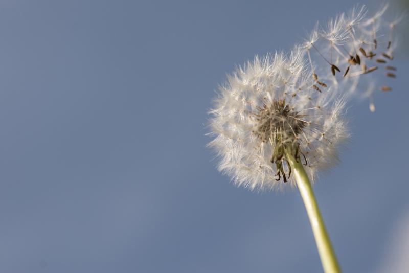 Voorjaarswind met veel informatie